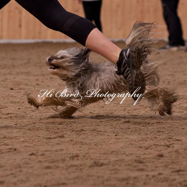 small dog day 2 1184.jpg