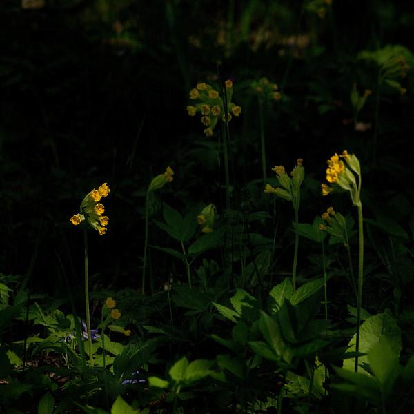 Dag_043_2012-maj-24_6594.jpg
