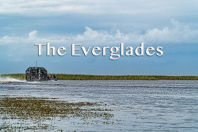 2019 11 24 | Everglades