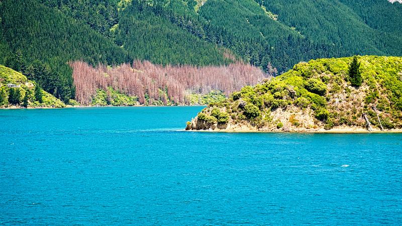View from Interislander ferry of Queen Charlotte Sound.
