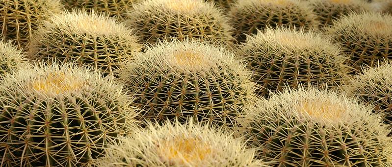 _DSC4294_Bordum_kaktus2.jpg