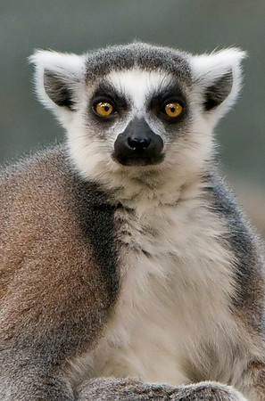 "Madagascar ""Bronx Zoo"""