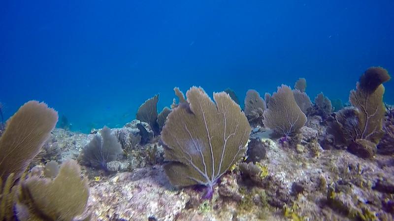 Ciesla-GOPR7593 - KC Coral.jpg
