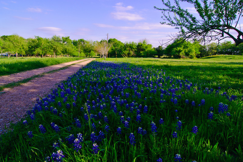 Blue Bonnett Lane at Chappell Hill-7662.jpg