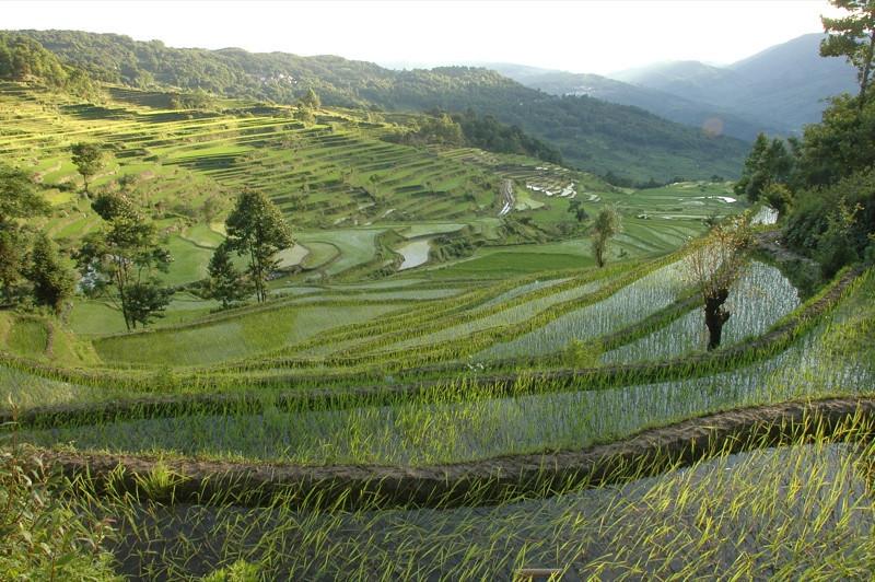 Yuanyang Rice Terrace - Yunnan, China