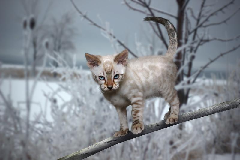 chaton-5.jpg