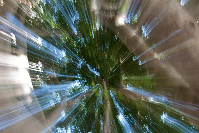 feb 14 - tree.jpg