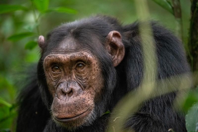 Uganda_T_Chimps-1691.jpg