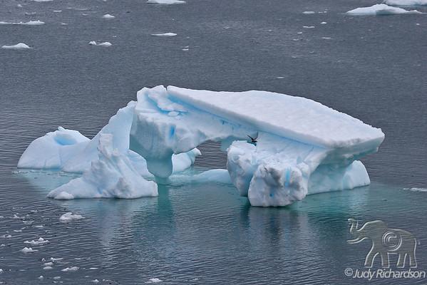 Magnificent Antarctic Icebergs