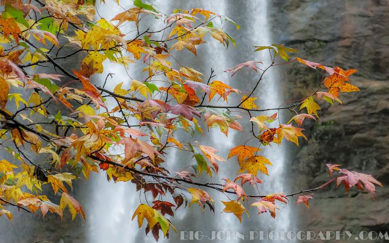 Fall 2015 South Carolina & Georgia