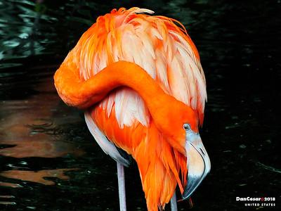 National Aviary