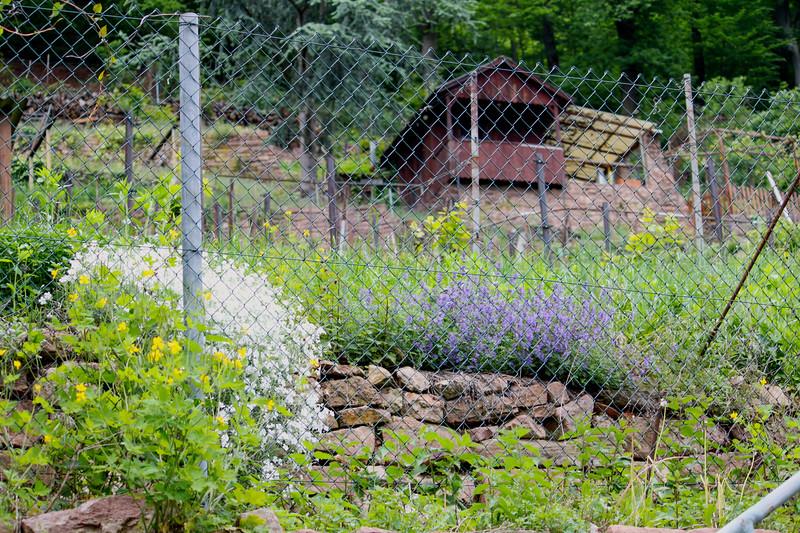 One of the gardens along Philosophenweg in Heidelberg