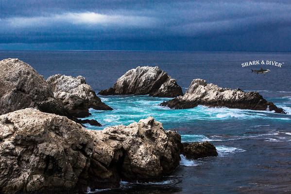 Assorted Marine Life & Landscape Scenes