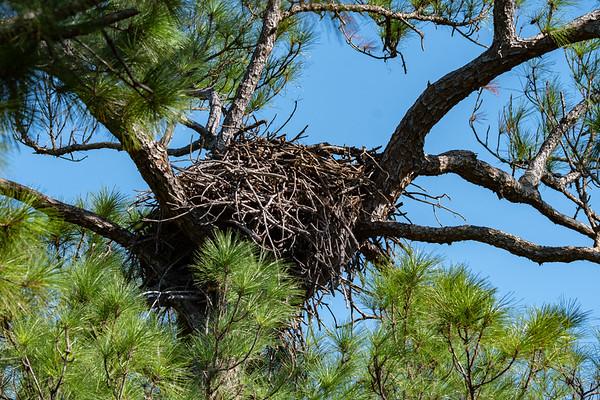 Melbourne Eagle's Nest - September  24, 2019
