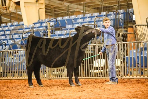 Heifer Show