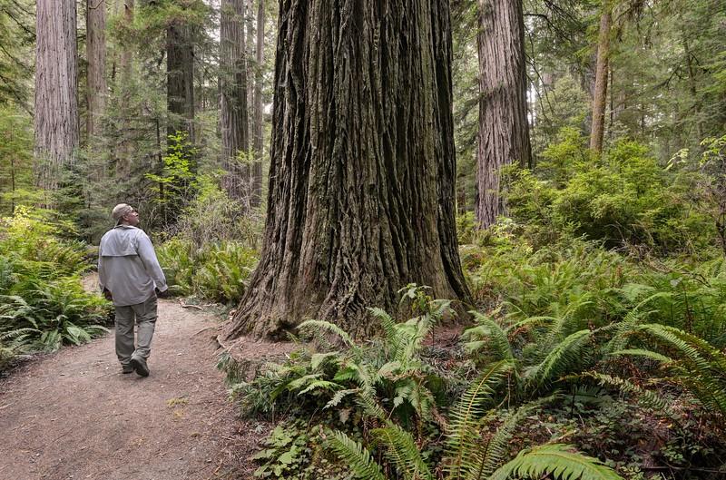 (2014-September 7-11) Lassen Volcanic and Redwood National Parks, California.