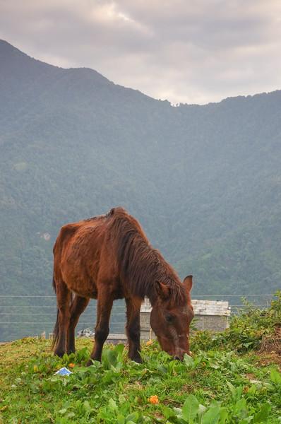 Trekking, Day Five:  Ghandruk to Tolka