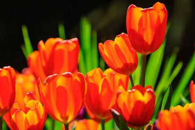 Favorite Botanical Photographs