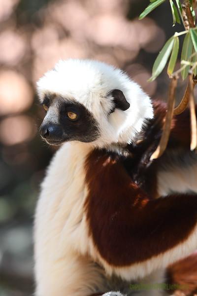Madagascar 2017 (42)