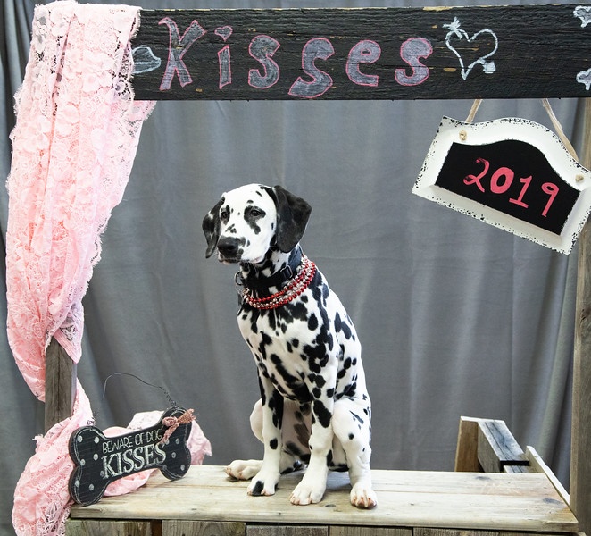 GDU Kissing Booth 2019-23.jpg