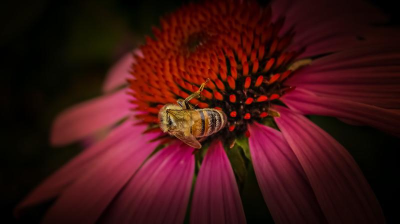 Bugs and Beetles - 32.jpg