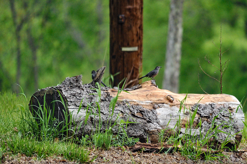 2015-05-10_NatureWalk@CarnegieLakePrincetonNJ_39.jpg
