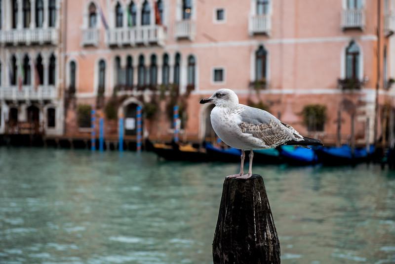 Venezia (39 of 373).jpg