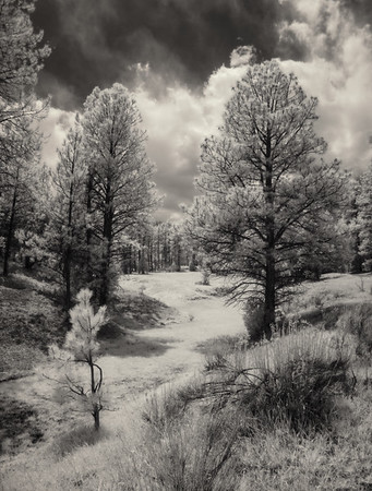 Infrared images