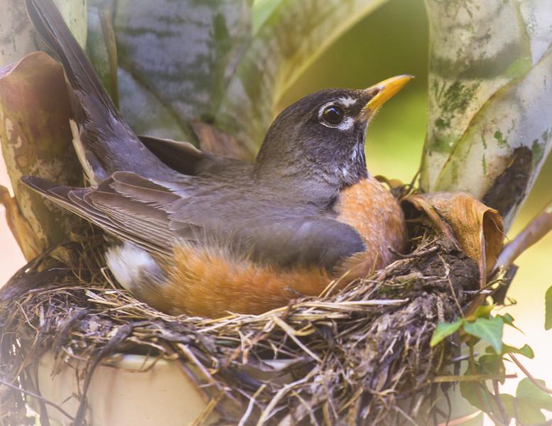 One her Nest IMG_6338-3-2-2.JPG