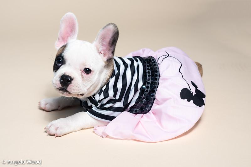 Puppies26.jpg