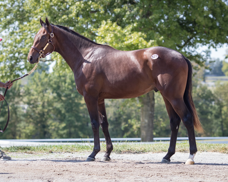 577 Union Rags - Painted Woman 18