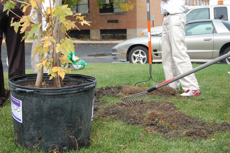 Planting Tree (7).JPG