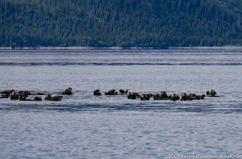 Sea Otter Float