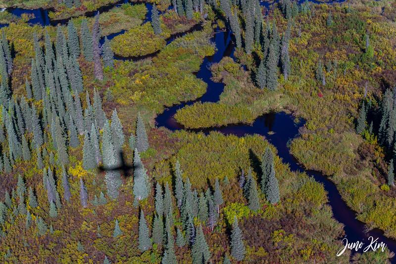 Rust's_Beluga Lake__6100943-2-Juno Kim.jpg
