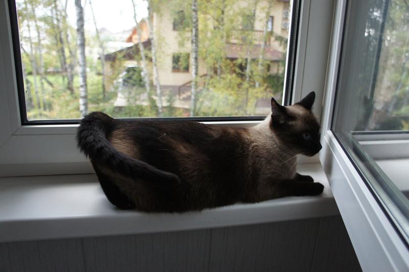 2011-10-01 У Мишки 07.JPG