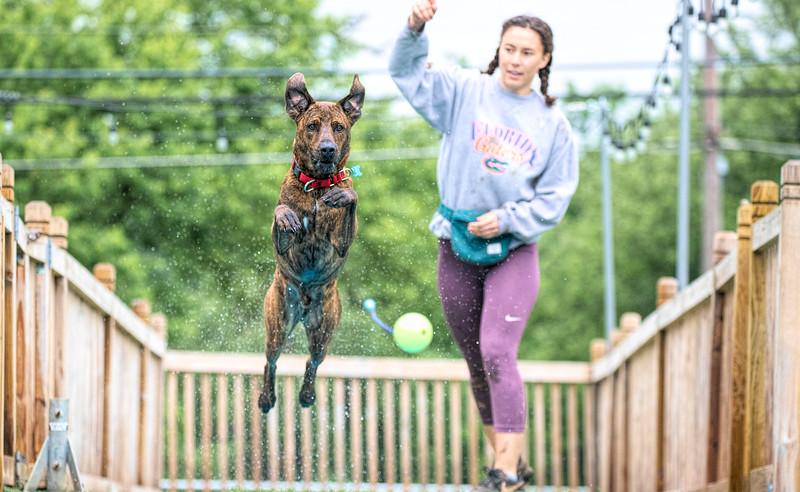 Dog Jumping Competition