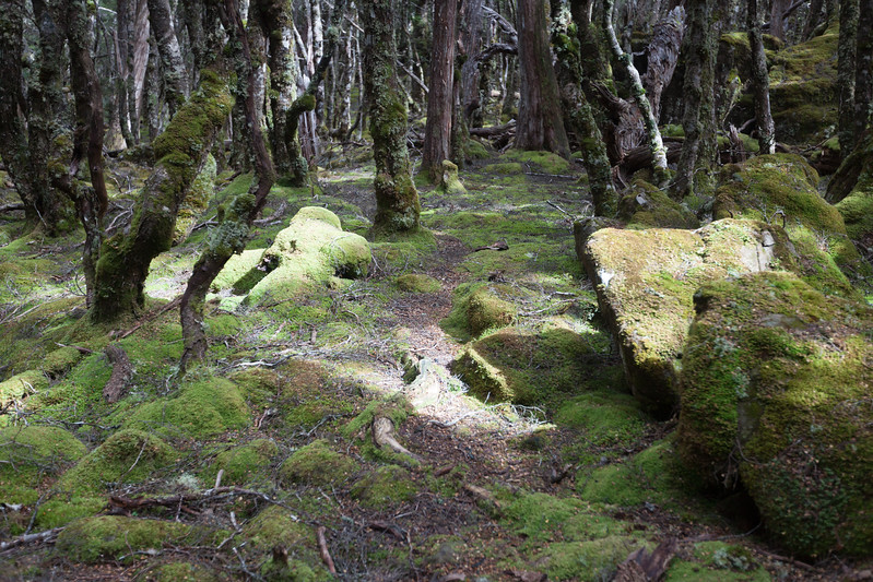 Tasmania_2015_138.jpg