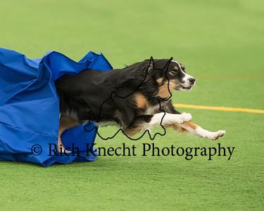 Dauphin Dog Training Club AKC Agility Trial October 19-20