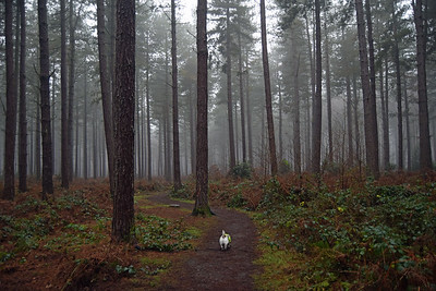 STAPLEFORD WOODS DOG WALK (3)