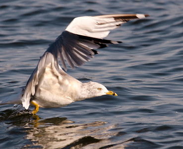 Seagull 9-2-12