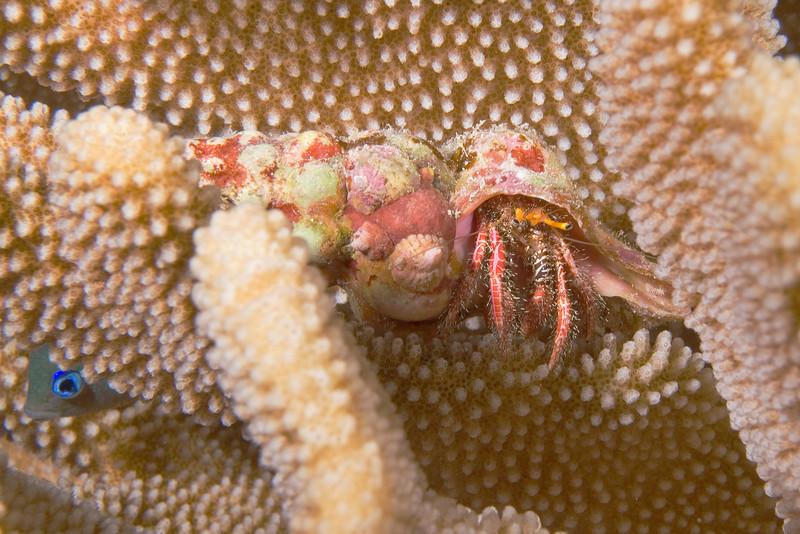 Hermit Crab 1.jpg