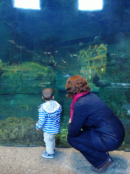 Looking at the fish at Outdoor World