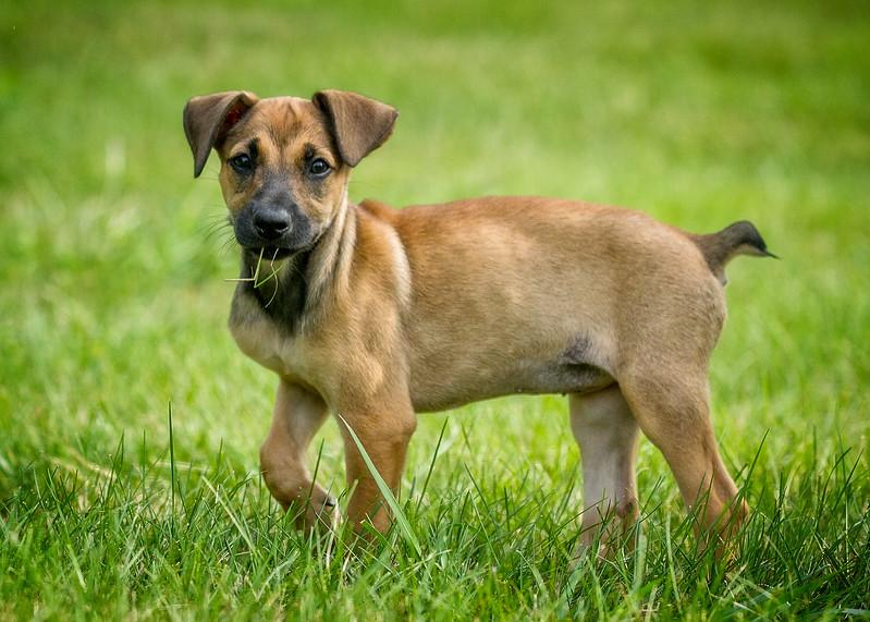 Roxy Pup 6557-.jpg