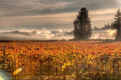 California Wine Vineyards