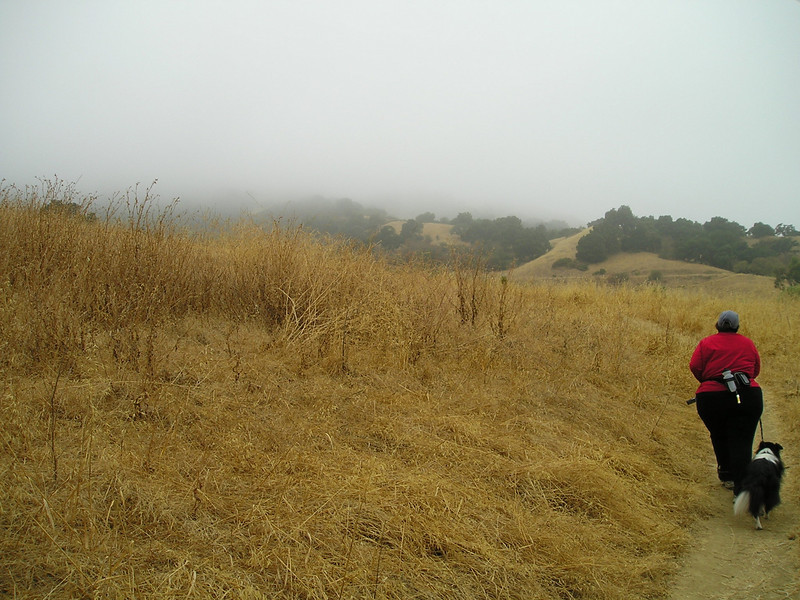 Fog and typical very dry summer grasses. Going up up up--