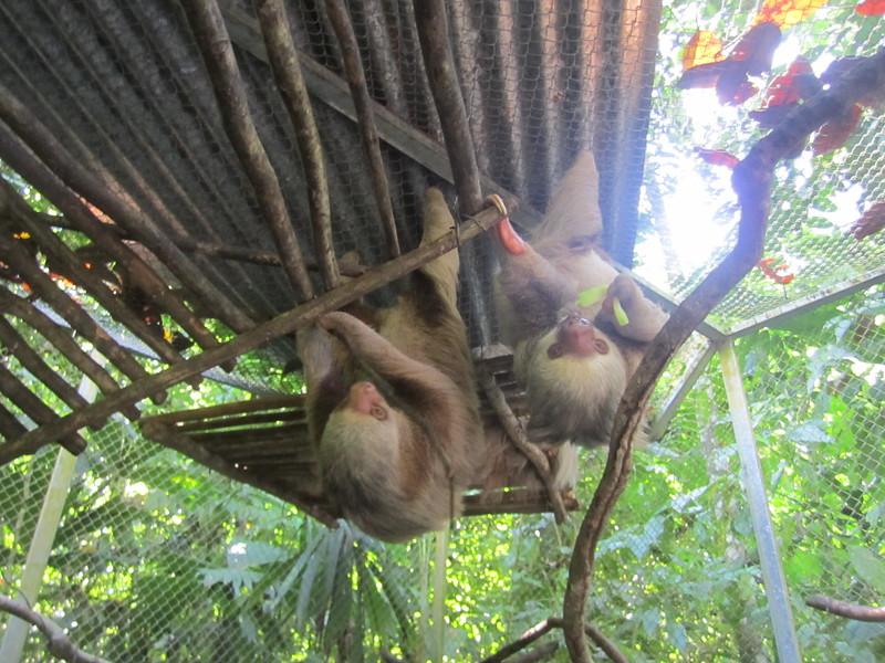 Panama Costa Rica 2013 577.jpg