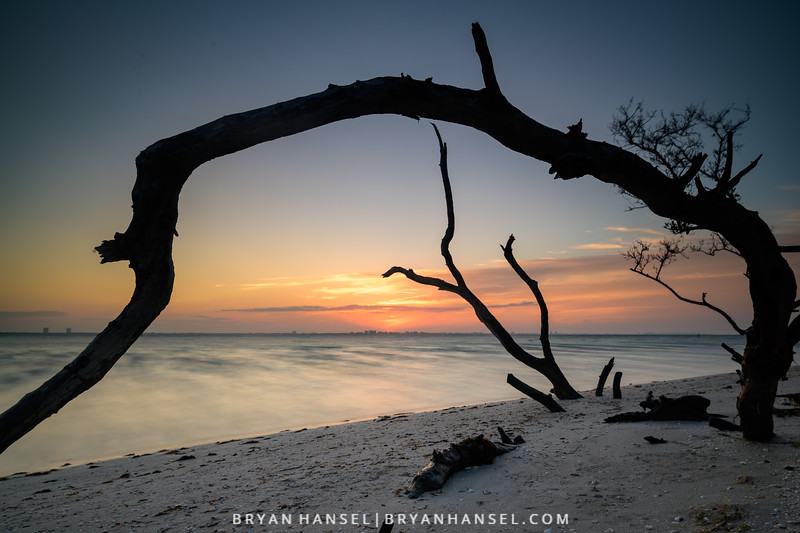 Sanibel Driftwood 6