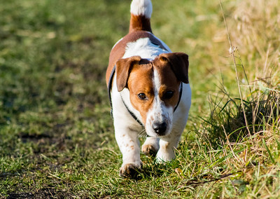 SUNNY FROSTY DOG WALK