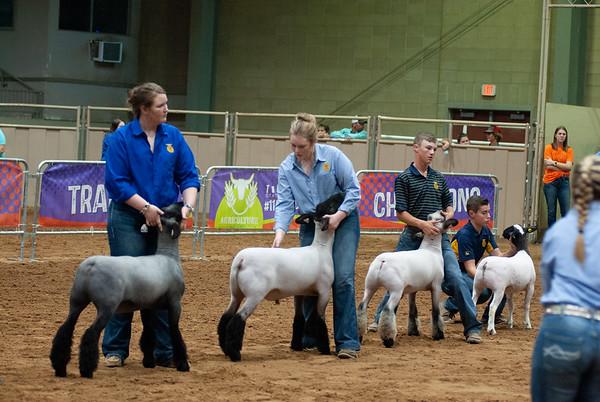 Tulsa Market Lamb Grand Drive