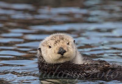 2015 February Otters